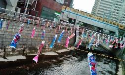 Kandagawa river koinobori fish kites